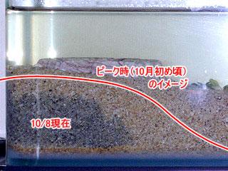 硫酸還元層の黒い硫化鉄