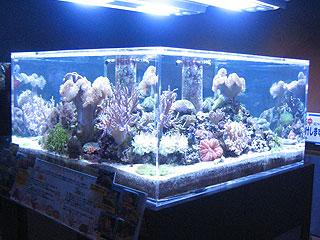 男鹿水族館のリーフ水槽