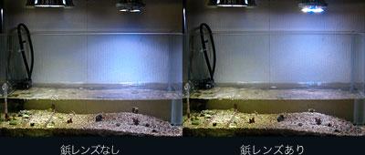 ピンレンズによる水槽ランプ効果