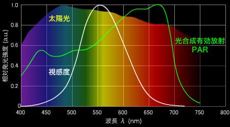 PARの有効波長帯と光合成感度