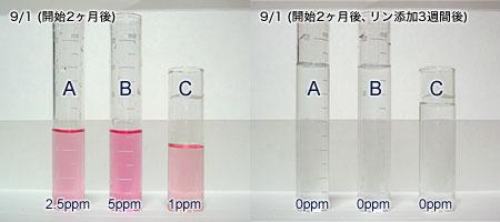 バイオペレット実験3:2ヵ月後の水質結果