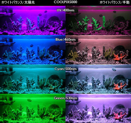 Coolpix5000による蛍光実験の撮影結果