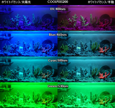 Coolpix5200による蛍光実験の撮影結果