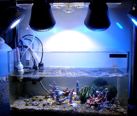 太陽光LEDシステムデモ機使用時の水槽の発色