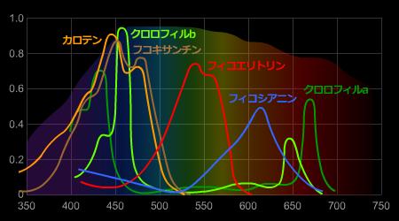 光合成色素の吸収スペクトル