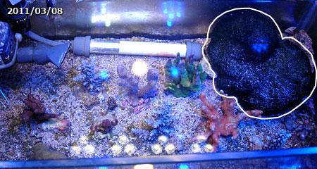 2011年3月時点の海藻オバケ