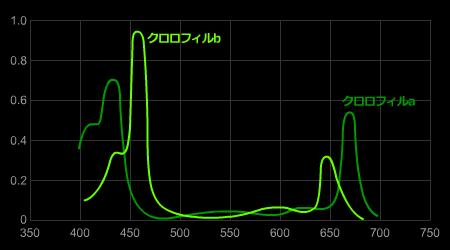 クロロフィル吸収スペクトル
