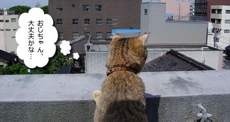 栗スケさん、屋上にて