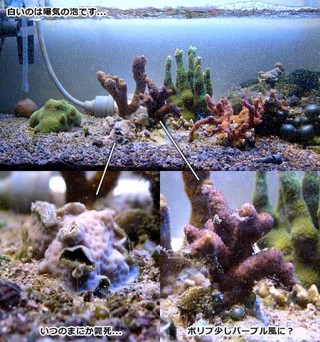 サンゴの状況 2011/07/27