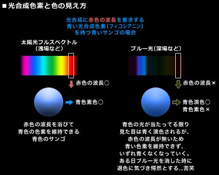 光合成色素と色の見え方