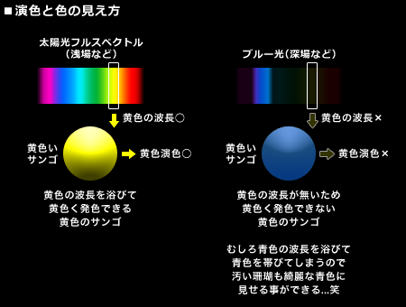演色と色の見え方