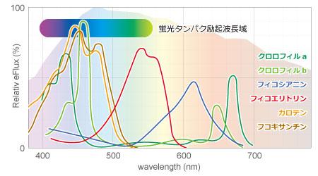 光合成色素の吸収波長と蛍光タンパクの励起波長