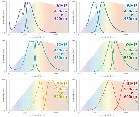 蛍光タンパクの代表的な励起・発光スペクトル