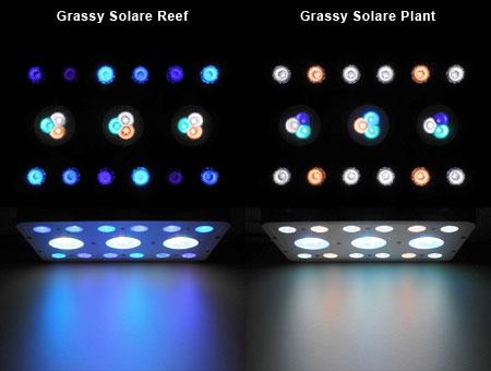 Grassy Solare LED配色とビーム光