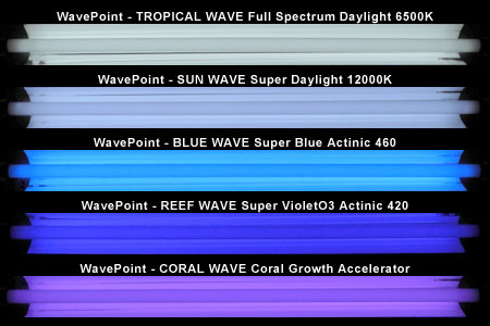 WavePoint 光色