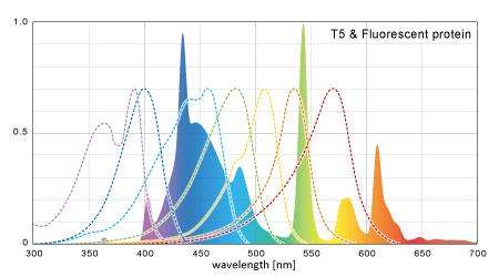 T5のスペクトルと蛍光タンパクの要求スペクトル