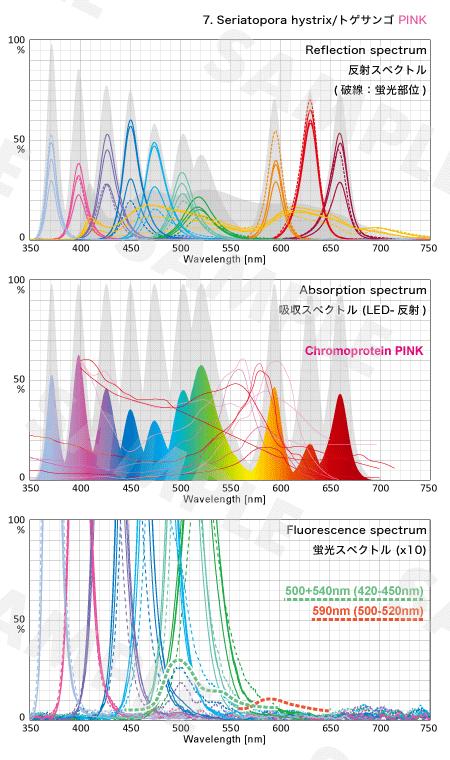 トゲサンゴの反射・吸収・蛍光スペクトル