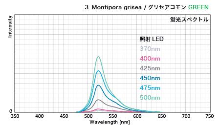 グリセアコモン・蛍光グリーン GFPスペクトル