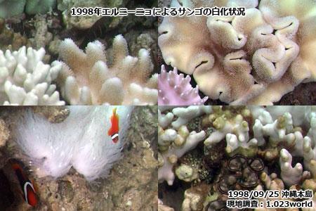1998年のエルニーニョによるサンゴの白化状況