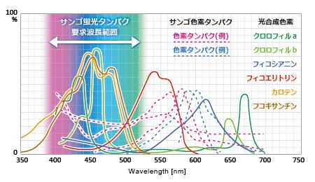 光合成色素、色素タンパク、蛍光タンパクの吸収スペクトル