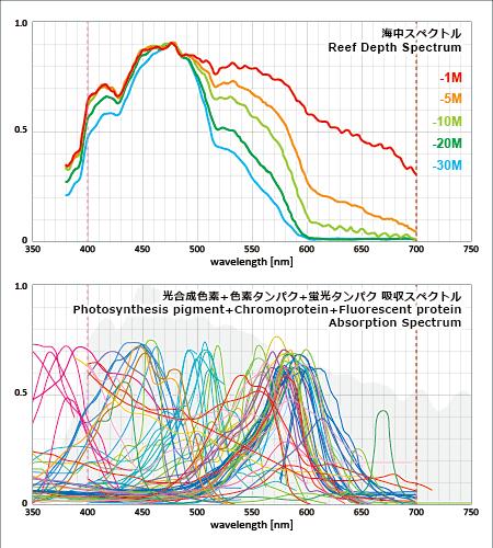 海中のスペクトルと海洋性光合成生物の色素の吸収スペクトル帯域