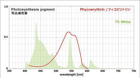 赤い光合成色素フィコエリトリンの吸収スペクトルとアクアT5の3波長スペクトル