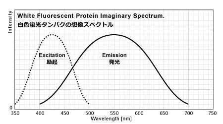 白色蛍光タンパクの想像スペクトル