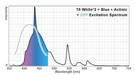 T5のシアン蛍光タンパク励起ポテンシャル