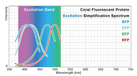 サンゴ蛍光タンパク励起スペクトル 簡略グラフと励起帯域
