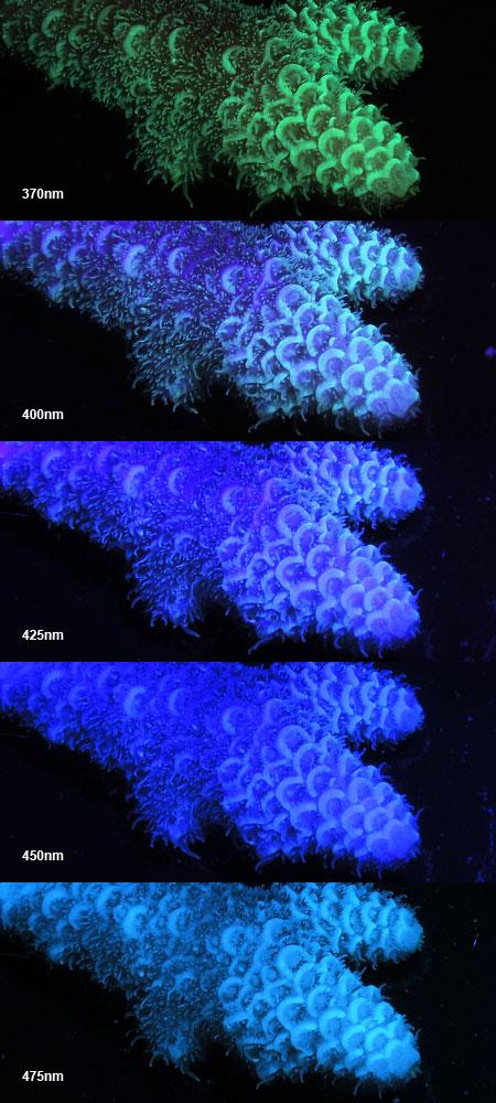 370-475nmに対する蛍光発光の様子