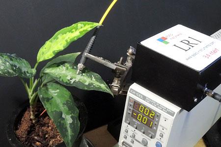 アグラオネマの葉の緑色の濃淡ごとに反射スペクトルを測定