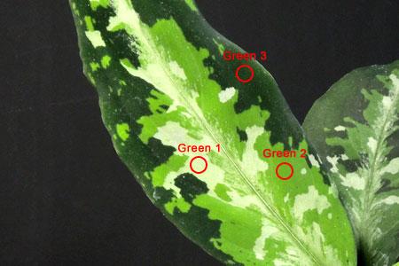 緑色の薄い順にGreen 1/Green 2/Green 3と定義