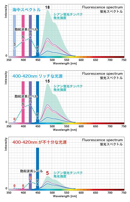 蛍光タンパクの発光量は励起波長毎の積算発光量である