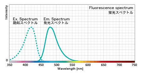 蛍光タンパクの励起スペクトル特性と発光スペクトル特性
