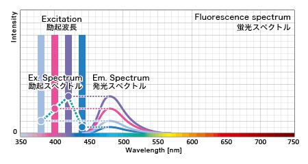 蛍光タンパクの励起波長毎の発光量を元に励起スペクトル特性が割り出される