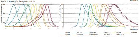 蛍光タンパクの励起発光スペクトル