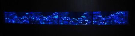 エプソンアクアパーク・コーラルカフェバーの巨大珊瑚水槽