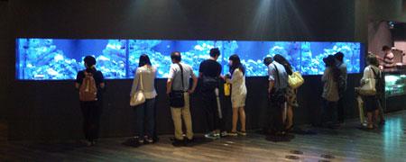 開館中のコーラルカフェバー巨大サンゴ水槽