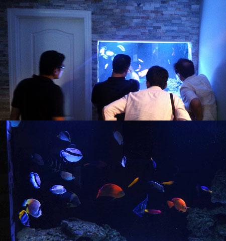 地下の水槽部屋にある魚水槽