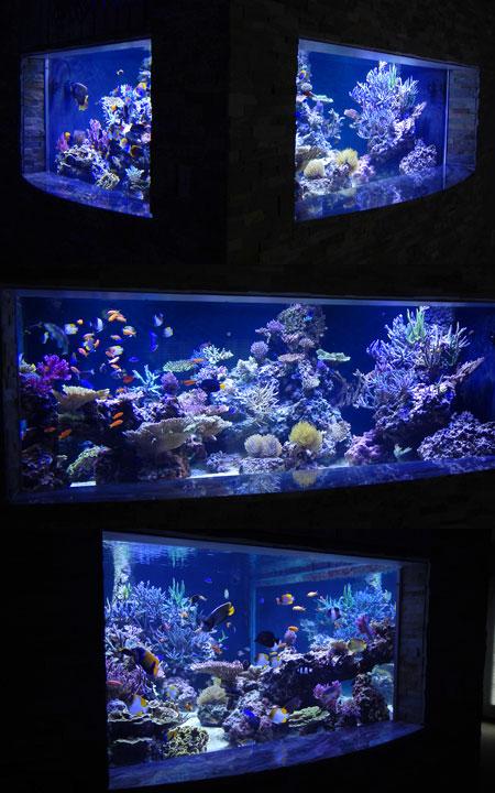 地下の水槽部屋にあるサンゴ水槽