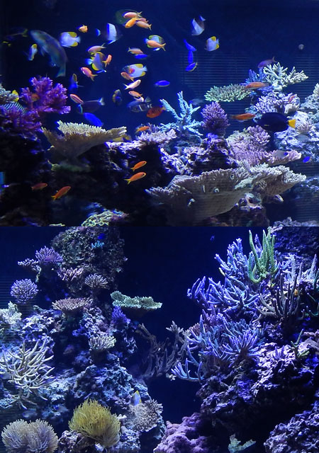 サンゴ水槽の前面の水景