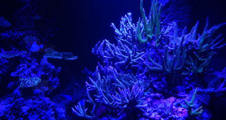 T8蛍光灯Actinic管のみの水景