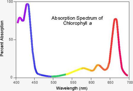 クロロフィルaの吸収スペクトル
