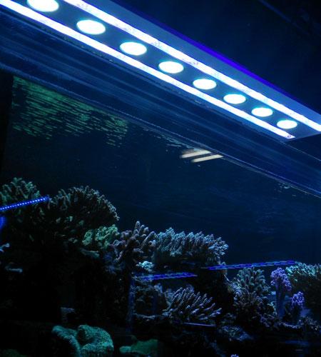 珊瑚堂に預け中のKRやサンゴ