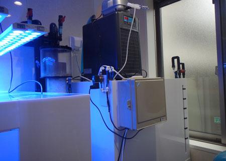 サンプ室は新LPS水槽の裏にある
