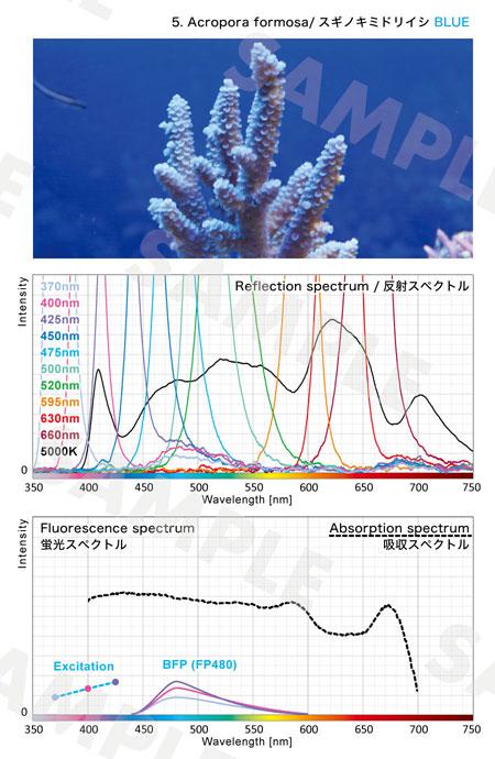 スギノキブルーの反射スペクトルとブルー蛍光タンパクの発光スペクトル特性