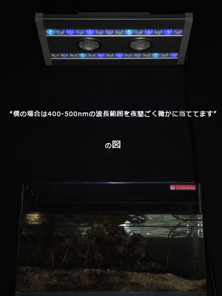 アマモ水草でムーン実験