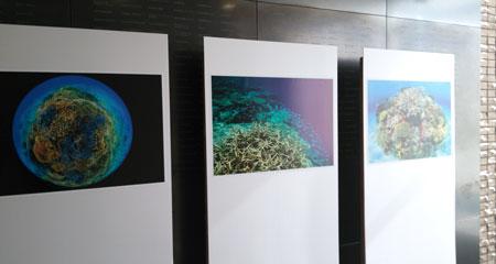会場に展示された中村さんの写真