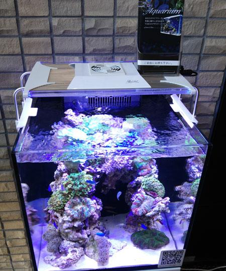 会場に設置されたMMC水槽