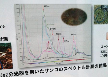 サンゴの反射スペクトル